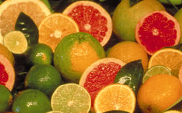 Citrus festival in Northern Cyprus